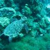 Urlaub Curaçao – Tag 2