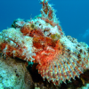 Tauchsafari Rotes Meer – Nordtour/Wracktour